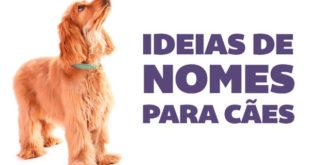 nome de cachorro femea